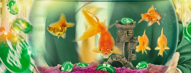 Mr green turniej slotowy na golden fish tank 1